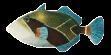 Hawaiian State Fish